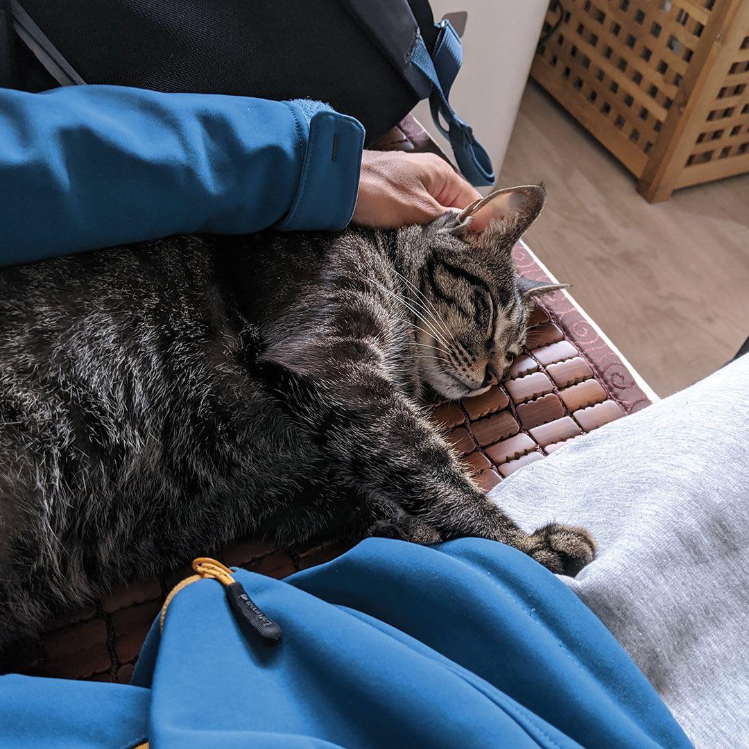 Cat sleeping on sofa.